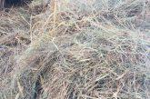 Забраняват косенето и почистването на треви и храсти